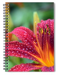 red-lily-carlene-smith (Fine Arts Designer) Tags: notebook notebooks writing write stationaery paper spiral