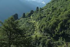 comme c'est beau! (bulbocode909) Tags: valais suisse valferret montagnes nature forêts arbres vert paysages sentiers