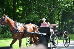 a wave (bluebird87) Tags: girl wave amish nikon d7200 horse wagon