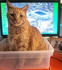 Is it Monday already? Do you have to work?! #petmeinsteadofworking #petmeinstead #pleasepetme #catinabox #catvswork #catvskeyboard #catvscomputer (tiina2eyes) Tags: is it monday already do you have work petmeinsteadofworking petmeinstead pleasepetme catinabox catvswork catvskeyboard catvscomputer ifttt instagram