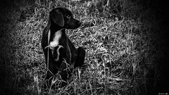Unexpected Company...Part I (Constantinos_A) Tags: puppy dog