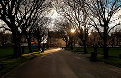 low winter sun in ashton gardens (john_snowdon) Tags: lythamstannes 2019 ashtongardens lowwintersun sunset afternoon february fujix100t publicpark england uk lancashire