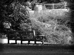 DSC02371b (Naturecamhd) Tags: sonycybershotdschx90v dschx90v hx90v newyorkbotanicalgarden nybg botanicalgarden nature bronx green eco blackandwhite twinlakes bench thebronx