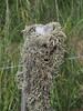 M2173165 E-M1ii 50mm iso200 f8 1_400s (Mel Stephens) Tags: plant plants nature flora lichen slains uk scotland aberdeenshire 20180617 201806 2018 q2 3x4 tall olympus mzuiko mft microfourthirds m43 40150mm omd em1ii ii mirrorless