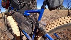 Day 4, Bike against desert oak