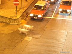 Нічний Гонконг Hongkong InterNetri 0528 (InterNetri) Tags: автомобіль гонконг honkong ніч ночь night китай car автомобиль 汽车 汽車 auto voiture αυτοκίνητο mobil 車 차 fiara bil samochód carro mașină coche araba xehơi hongkong 香港 홍콩 азія internetri qntm