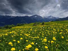 Bergfrühling (idogu) Tags: val lumnezia vella grisons switzerland