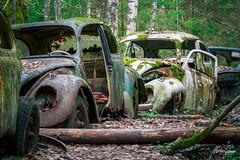 Stop and Go (MGness / urbexery.com) Tags: abandonedplaces lostplaces rotten decay lostplace abandones lost vergessen autofriedhof cars rust forgotten cargraveyard käfer beetle volkswagen vw car abandoned