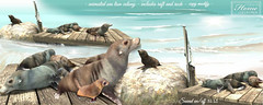│T│L│C│'Sea lion Colony' (- TRUE & LAUTLOS CREATIONS -) Tags: tlc home collection animated animal store sl secondlife cosmopolitan biweekly event anniversary 6th sealion wildlife