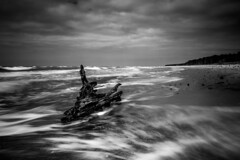 Easy come, easy go. ([-ChristiaN-]) Tags: wood root holz wurzel bw sw schwarz weiss black white sea meer beach strand dars baltic ostsee clouds sky wolken himmel monochrome mono