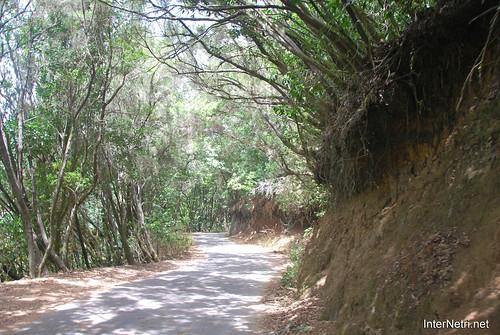 Національний парк Гарахонай, Гомера, Канарські острови  InterNetri  0729