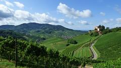 Brandeckkopf et Schloss Staufenberg (ViveLaMontagne67) Tags: landscape allemagne germany deutschland forêtnoire nordschwarzwald schwartzwald durbach vines vineyard vignoble vignes castle château