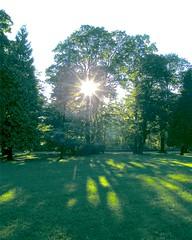 Tree Sun Burst (Stanley Zimny (Thank You for 31 Million views)) Tags: sun tree light shadow burst
