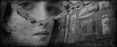 Mimètic (Kaobanga) Tags: mimètic mimético mimetic mimetisme mimetismo mimicry blancinegre blancoynegro blackandwhite bn bw olympus olympusem1markii mzuiko zuiko 714mm 714 kaobanga