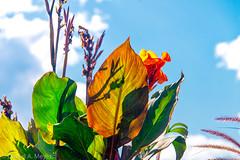 Botanic Garden (Anselm11) Tags: gegenlicht schatten projektion garten trautmannsdorff botanischer