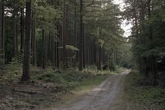 (turquoise monkey) Tags: revueflexsd1 kodakportra iso160 takumar55mmf18 forest dehogeveluwe gelderland afternoon trees netherlands