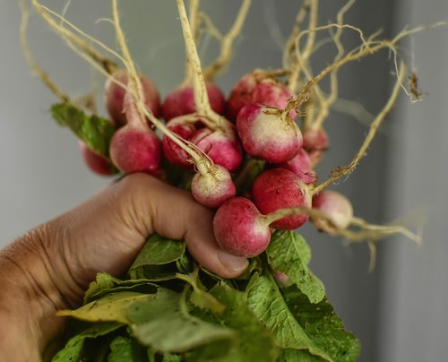A Bouquet Of Radishes