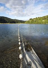Buoy Line (fantommst) Tags: lisaridings fantommst lake waikaremoana holiday park nz newzealand boats steam teurewera east coast north island opourau bay hawkesbay