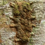 Ant nest thumbnail