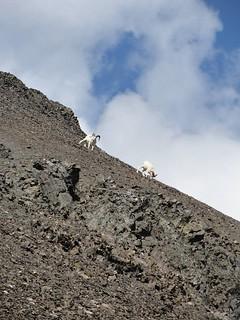 Alaska Dall Sheep Hunt & Moose Hunt 36