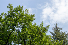 Looking up (Photography by Martijn Aalbers) Tags: forest bos trees bomen leaves bladeren green groen branches takken path pad walk wandeling nature natuur colour kleur color sunny zonnig summer zomer light licht shadow schaduw canon eos 77d ef70200mm f4l is usm wwwgevoeligeplatennl utrechtseheuvelrug