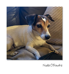 Day 190 - Missed you (nualao) Tags: 365 bunny jrt pad year6 dog