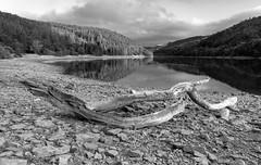 Ladybower Reservoir (l4ts) Tags: landscape derbyshire peakdistrict darkpeak woodlandsvalley ladybowerreservoir lowwaterlevel treetrunk blackwhite monochrome