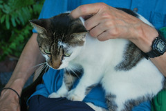 Key West (Florida) Trip 2017 0437Ri 4x6 (edgarandron - Busy!) Tags: cat cats kitty kitties cute feline florida keys floridakeys keywest hemingwayhome