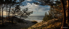 The coastline of the Baltic Sea (Magda Banach) Tags: balticsea canon canoneos5dmarkiv beach blue clouds colors flora landscape nature outdoor outside plants poland polska sand sea sky summer sunset tree trees