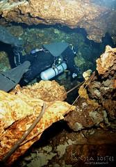 IMG_0274 (2) (SantaFeSandy) Tags: cow cowsink guybryant sandrakosterphotography sandrakosterphotographycom sandykoster sandra scuba santafesandysandrakosterphotographycom swimmers swim canon ikelite laraville mayo nsscds sandrakoster cave cavern camera catfish caves cavedivers underwaterphotography underwater experiment sidemount runningline reels wetsuit drysuit scubapro scubadiving scubadivers bare nomad nomadltz nomadls clay claybanks selfie