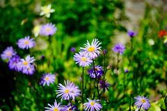 Flowers (vladimirfeofanov) Tags: