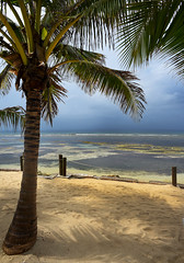 Storm Coming (Anthony Mark Images) Tags: tree palmtree coconutpalm coconuts shadows sand clouds stormclouds rain rope poles seaweed ocean sea water caribbeansea jamaica westindies caribbean