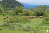 Cow Elk (Yale Creek) Tags: grandtetonnationalpark elk