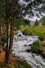 El Cajas National Park - Azuay, Ecuador (Marco A Rodriguez) Tags: cajas ecuador rio stream riachuelo santuario sanctuary pines brook bosque