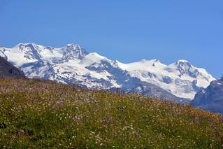 Prato fiorito davanti al Monte Rosa