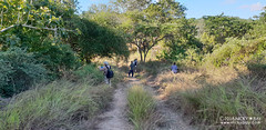 Down the very dry track - 20180527_150956 (nickybay) Tags: macro bugshot africa mozambique sofala gorongosa