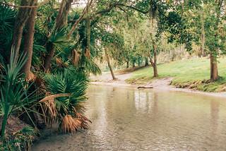 Morning at Wekiva Falls