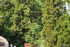 Київ, Ботанічний сад імені Фоміна Ukraine InterNetri 10