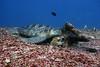 Turtle 8 (Petter Thorden) Tags: diving indonesia gili trawangan underwater turtle
