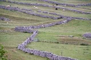 Stone walls - Malham Cove