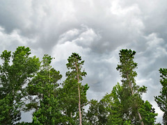 Trees And Storm Clouds. (dccradio) Tags: lumberton nc northcarolina robesoncounty outdoor outdoors outside nature natural cloud clouds overcast storm stormy stormclouds expectingrain greysky greyclouds graysky grayclouds summer summerstorm thunderstorm sky landscape canon powershot elph 520hs tree trees leaf leaves foliage treebranch treebranches treelimb treelimbs branch branches backyard wooded woods forest