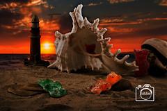 Gummibären Urlaub (DJR-FOTO) Tags: gummibären urlaub vacation sand beach strand sunset sonnenuntergang clouds outside outdoor drausen wolken orange muschel candy süsses miniatur unlimited photos unlimitedphotos