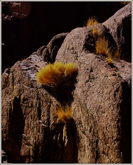 LIFE IS WHERE YOU FIND IT. (Gary Post) Tags: life is where you find it rock plant isolation
