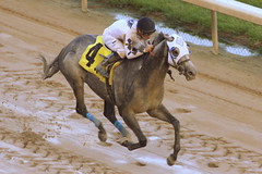 Churchill Downs Race: Tiznoble wins (SeeMidTN.com (aka Brent)) Tags: churchilldowns louisville ky kentucky horse horseracing thoroughbredhorseracing thoroughbred race racing equestrian bmok bmok2 axugky