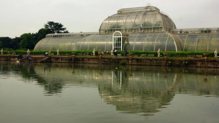 Reflecting on the palm house