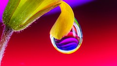 A nice drop - 5448 (ΨᗩSᗰIᘉᗴ HᗴᘉS +18 000 000 thx) Tags: drop droplet water macro goutte pearl perle hensyasmine namur belgium europa aaa namuroise look photo friends be wow yasminehens interest intersting eu fr greatphotographers lanamuroise tellmeastory flickering sony laowa laowa25mm