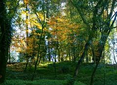 Walk in the park... (vmribeiro.net) Tags: geo:lat=4155484268 geo:lon=837587357 geotagged cachada portugal prt senhora da rocha braga parque bom jesus sony a350 forest park tree animal sky grass wood road foliage trail