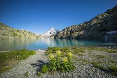 Lac Blanc with Aguille Verte (Bernhard_Thum) Tags: bernhardthum thum lacblanc leicam zm carlzeiss aguilleverte distagont2815 nature distagon1528zm