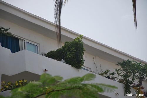 Готель Хардін Тропікаль, Тенеріфе, Канари  InterNetri  420