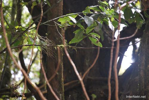 Національний парк Гарахонай, Гомера, Канарські острови  InterNetri  0705